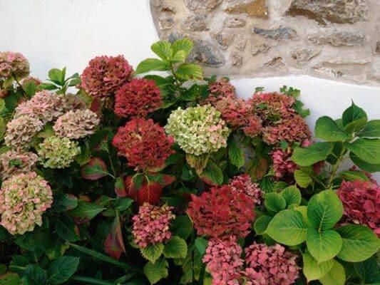 Jardinet fleuri